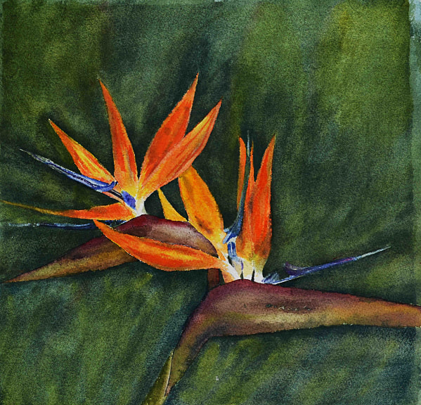 Bird Of Paradise Flowers. Unframed watercolour on paper (290mm x 290mm)
