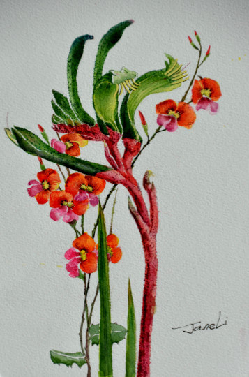 Flaming Pea Flower with Kangaroo Paw. Watercolour on watercolour paper. (160mm x 240mm), unframed.