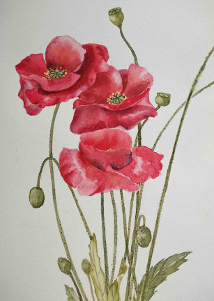 Red Poppies.  Unframed watercolour on paper, (200mm x 250mm).
