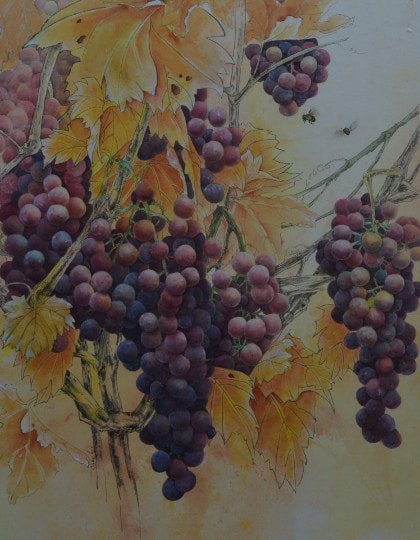 A Ripe Harvest. Grapes in the sunshine. Watercolour on Watercolour paper. (420mm x 640mm), unframed.